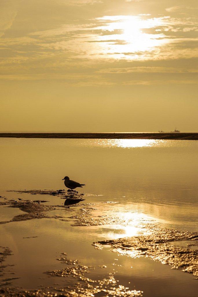 Nordsee #13