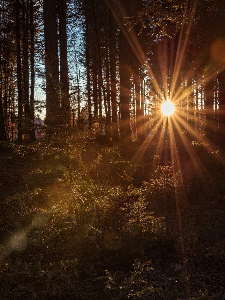 Sonnenstern #2