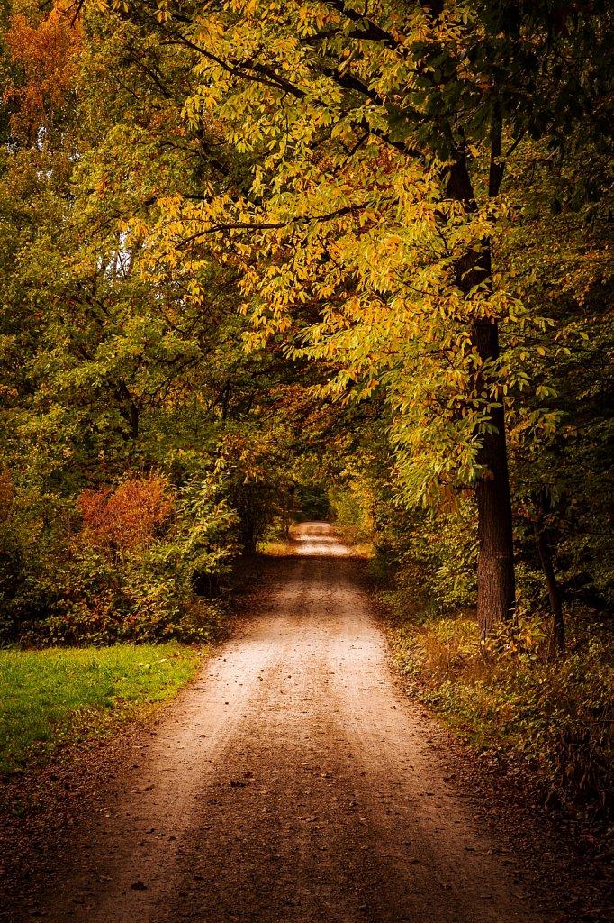 Herbststimmung #1