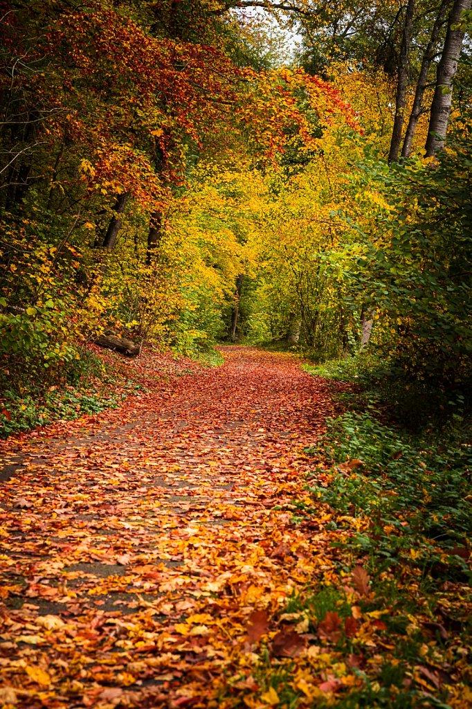 Herbststimmung #3